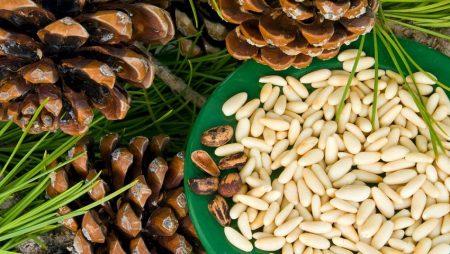 Кедровые-орехи